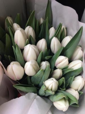 Тюльпан белый - 19 тюльпанов